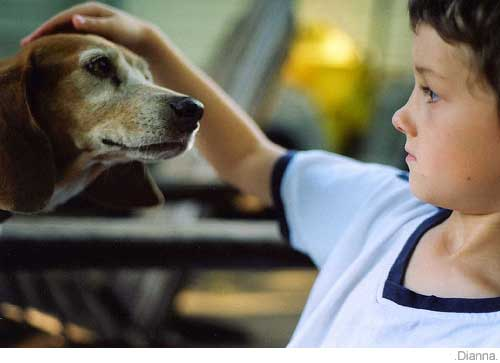 Picture of beagle and boy