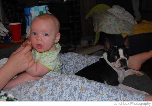 Picture of boston terrier and baby.jpg