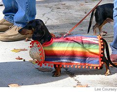 Picture of dachshund in serape