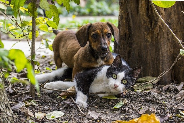 Picture of little dog and cat friendship.jpg